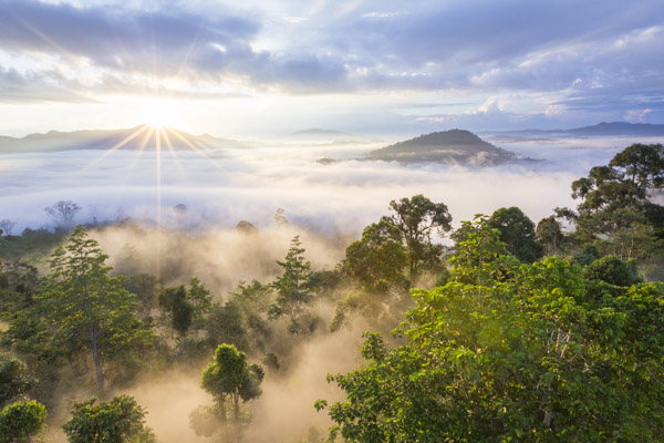 Sunrise over Borneo's jungle