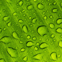 water drops of leaf