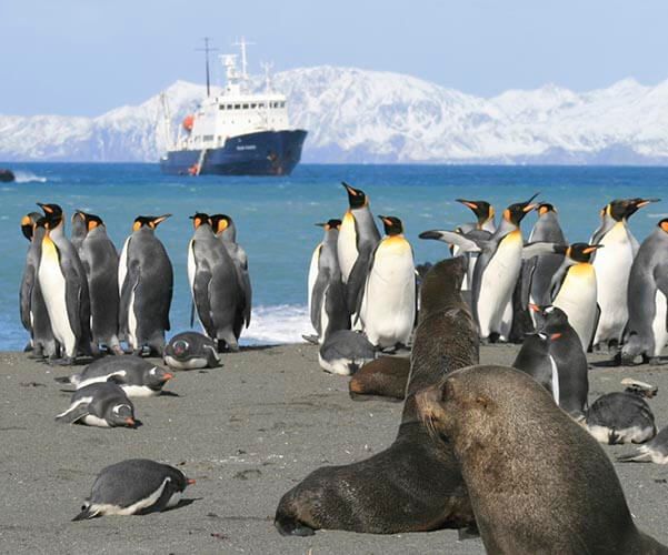 antarctica and south georgia photo tour