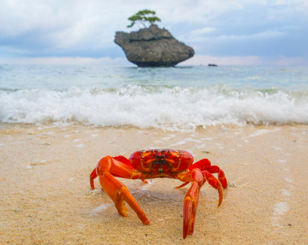 christmas island photography tour red crab wildlife