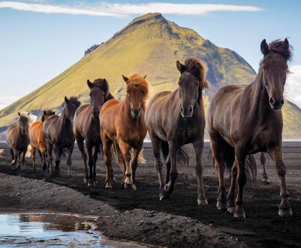 Iceland Greenland photography tour horses