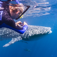 Karijini Ningaloo photo tour whale shark
