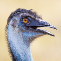Karijini Ningaloo photo tour wildlife emu