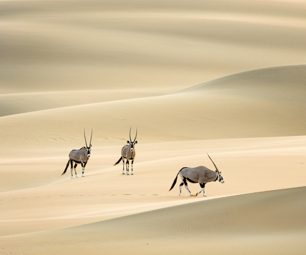 namibia botswana photo tour oryx in desert