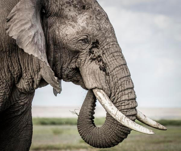 elephant on photo tour in kenya