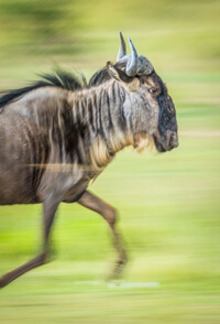 how to take panning photos